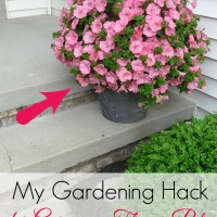 Entertaining Fridays #3:  Gardening Hack for Gorgeous Flower Pots