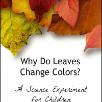 Why Do Leaves Change Colors?  A Science Experiment with Kids