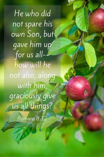 He who did not spare his own Son, but gave