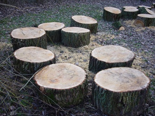 tree-stumps-66915_640