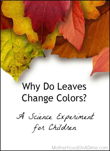 why do leaves change colors - science experiment for kids
