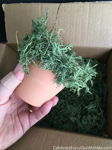 moss covered teracotta pot 5