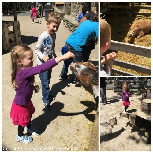 petting farm at Cedar Point